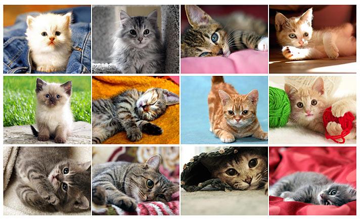 [Macskák (kiscicák) - 2019]